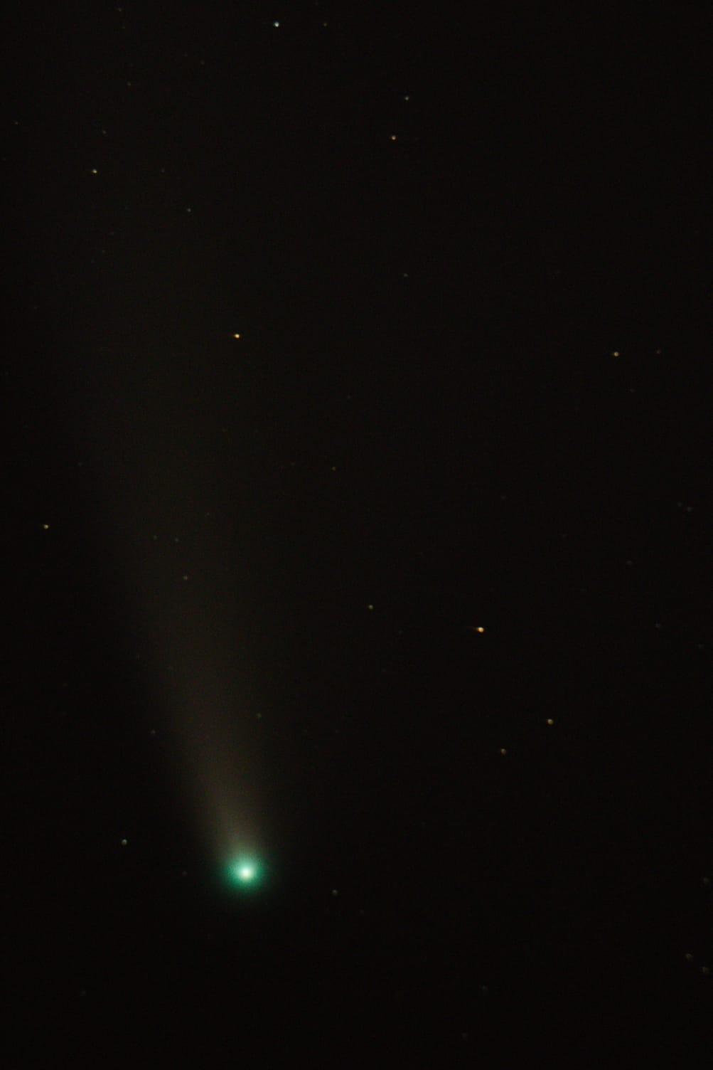 La chioma mostra una pronunciata colorazione verde in questa foto di Paolo Mini.